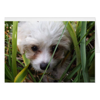 Cute Cavachon Puppy Card