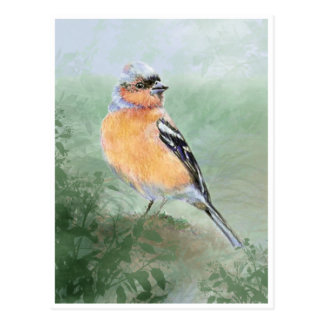 Cute Chaffinch, Watercolor Bird Collection Postcard