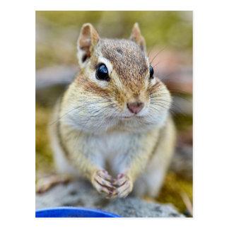 Cute Cheeky Chipmunk Postcard