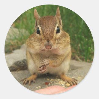Cute Cheeky Chipmunk Round Stickers