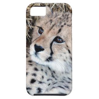 Cute Cheetah Cub Photo iPhone 5 Case