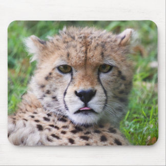 Cute cheetah cub portrait mouse pad