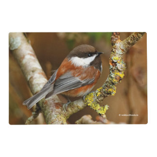 Cute Chestnut-Backed Chickadee on the Pear Tree Placemat