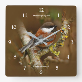 Cute Chestnut-Backed Chickadee on the Pear Tree Square Wall Clock