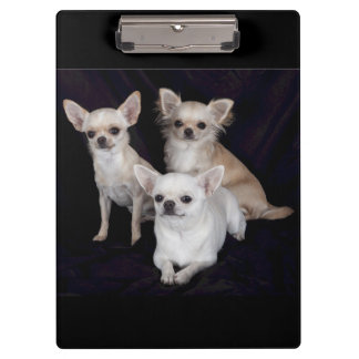 Cute Chihuahua Puppies Clipboard