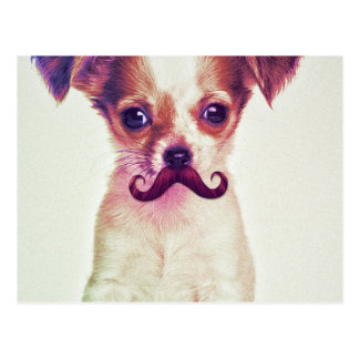 Cute Chihuahua With Purple Funny Moustache Post Card
