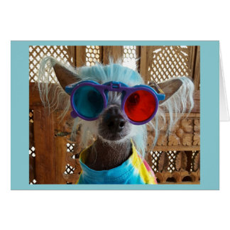 Cute Chinese Crested Hippie Dog Greeting Card