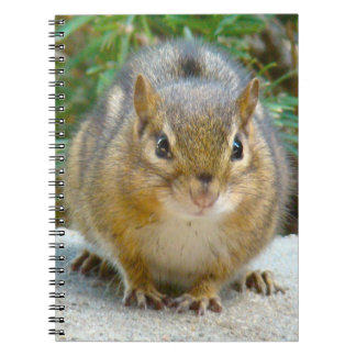 Cute Chipmunk Has His Eye On You Notebooks