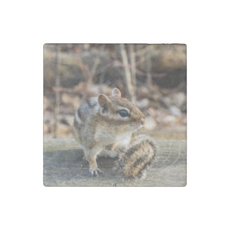 Cute Chipmunk Sitting on Wooden Rail in Forest Stone Magnet