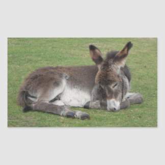Cute chocolate donkey baby foal sleeping rectangular sticker