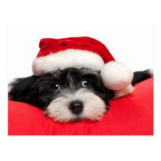 Cute Christmas Havanese Puppy Dog Postcard