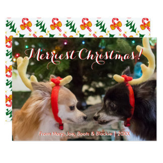 Cute Christmas Reindeer Dogs & Candy Cane Pattern Card