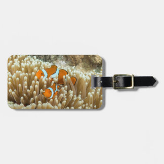 Cute Clown Fish Luggage Tag