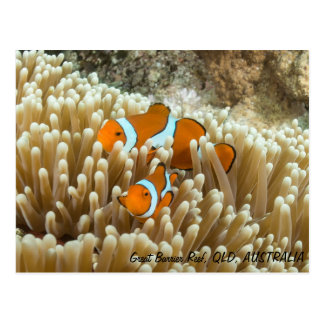 Cute Clown Fish Postcard