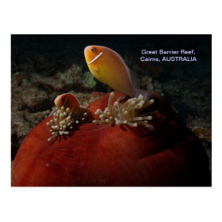 Cute Clownfish Great Barrier Reef Coral Sea Postcard