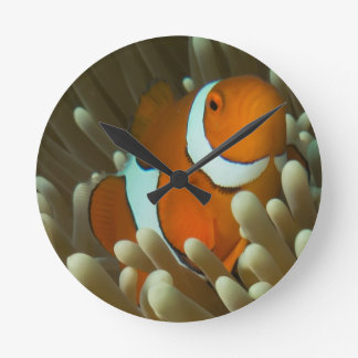 Cute Clownfish on the Great Barrier Reef Round Clock