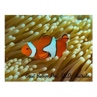 Cute Clownfish Postcard