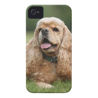 Cute Cocker Spaniel iPhone 4 Covers