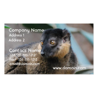 Cute Collared Lemur Business Card Templates