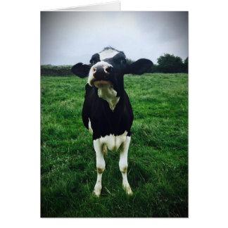 Cute cow farm animal calf print card