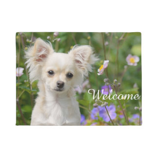 Cute cream Chihuahua Dog Puppy Pet Photo - Welcome Doormat