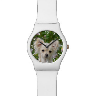 Cute cream Chihuahua Dog Puppy Photo - dial-plate Watch