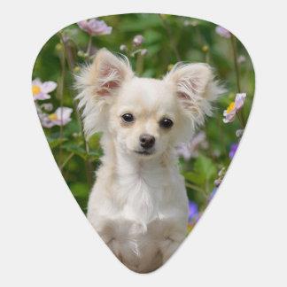 Cute cream Chihuahua Dog Puppy Photo - Plectrum