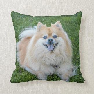 Cute Cream Sable Pomeranian Dog in the Grass Cushion