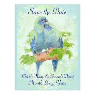 Cute Cuddling Tropical Parrot Bird Wedding Couple Postcard