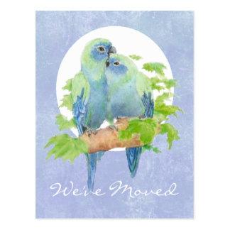 Cute Cuddling Tropical Parrots   Address New Home Postcard