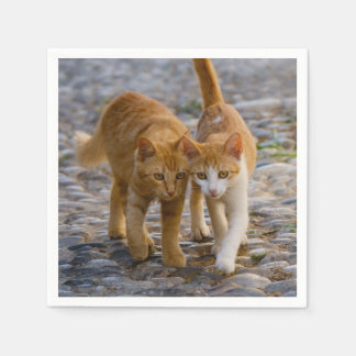 Cute Cuddly Cats Kittens Friends Stony Path Photo Disposable Serviettes
