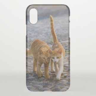 Cute Cuddly Cats Kittens Friends Stony Path Photo iPhone X Case