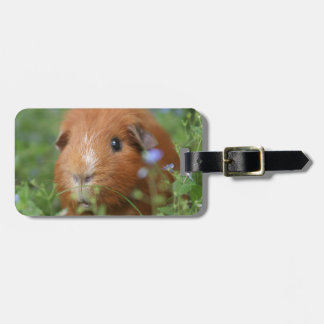Cute cuddly ginger guinea pig outside on grass bag tag