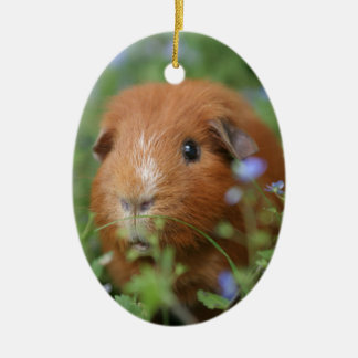 Cute cuddly ginger guinea pig outside on grass ceramic oval decoration