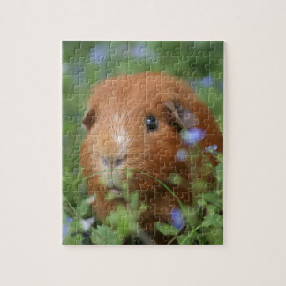 Cute cuddly ginger guinea pig outside on grass jigsaw puzzle
