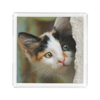 Cute Curious Cat Kitten Prying Eyes Quadrat Acryl Acrylic Tray