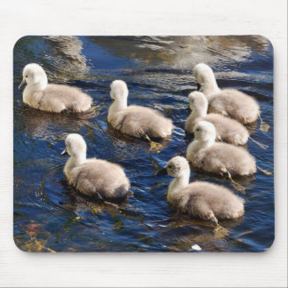 Cute Cygnets Mouse Mat