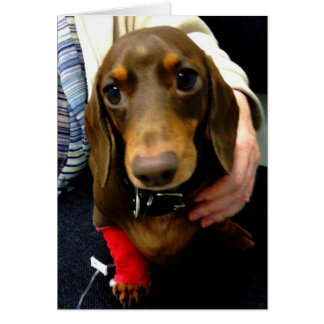 Cute Dachshund get well soon card