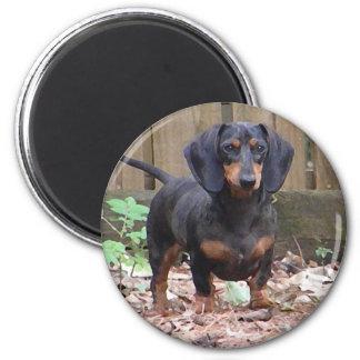 Cute dachshund magnet