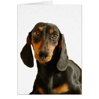 Cute Dachshund ( Miniature Brown Short Haired ) Greeting Card