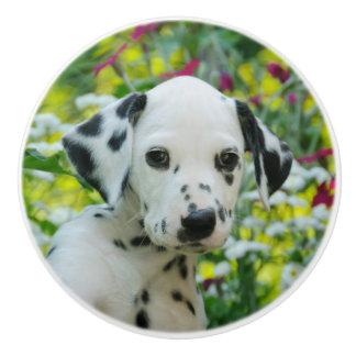 Cute Dalmatian Dog Cute Puppy Portrait, Decorative Ceramic Knob