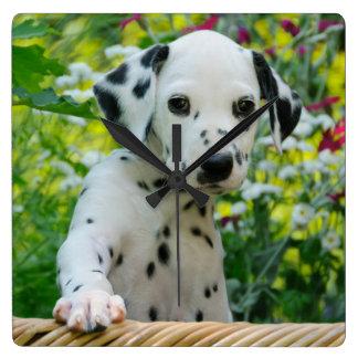 Cute Dalmatian Dog Puppy Portrait Photo - acrylic Square Wall Clock