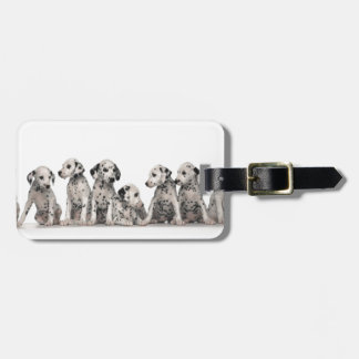cute dalmation puppies pupy pup pups dog dogs bag tag
