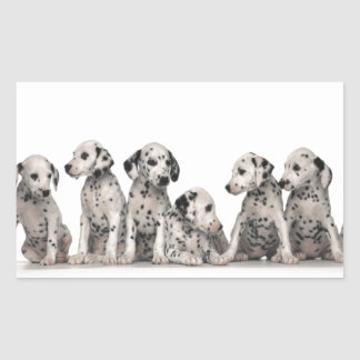 cute dalmation puppies pupy pup pups dog dogs rectangular sticker
