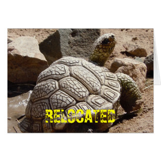 Cute Desert Tortoise - Change of Address Card