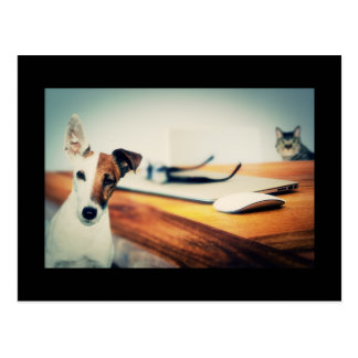 Cute Dog and Cat in Office Postcard