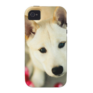 Cute dog iPhone 4/4S covers