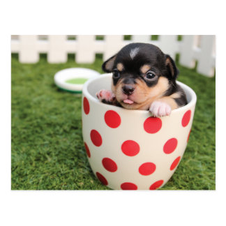 Cute Dog in mug Postcard
