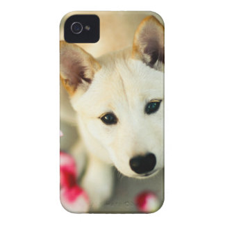 Cute dog iPhone 4 cases