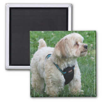 Cute Dog Magnet - Copper the Havapookie